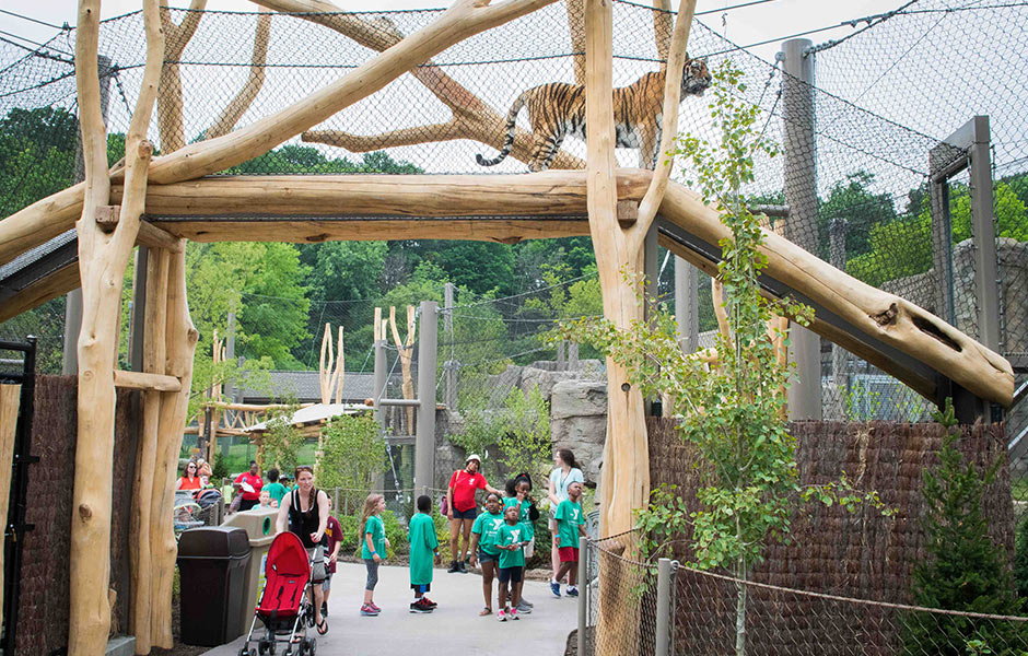 Zoo - Rosebrough Tiger Passage Exhibit- Panzica Construction